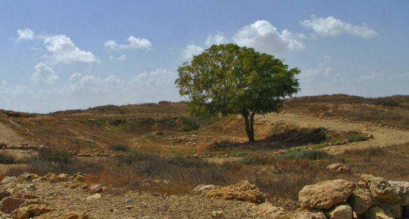 albero neem deserto